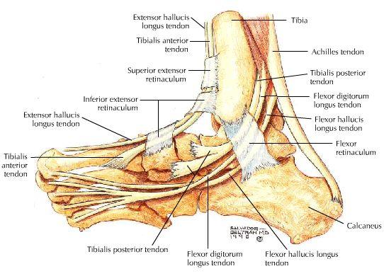 Osteochondropathy Of The Talus Help Talk Tennis