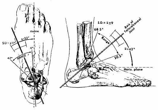 Figure 2: ankle axis horizontal